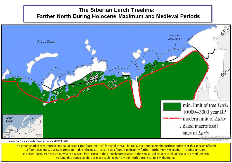 Siberian Larch Treeline Holocene and Medieval