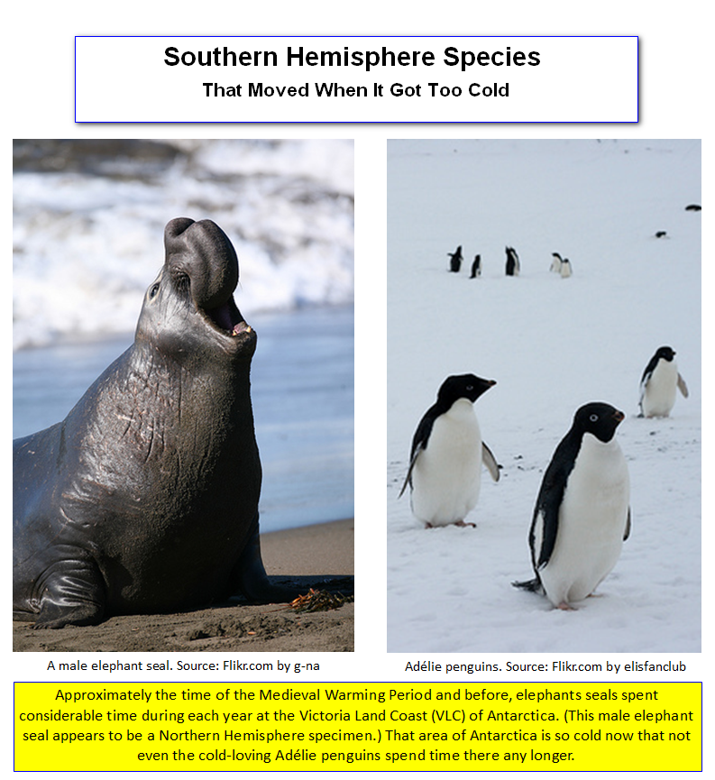 Antartical Seals and Penguins