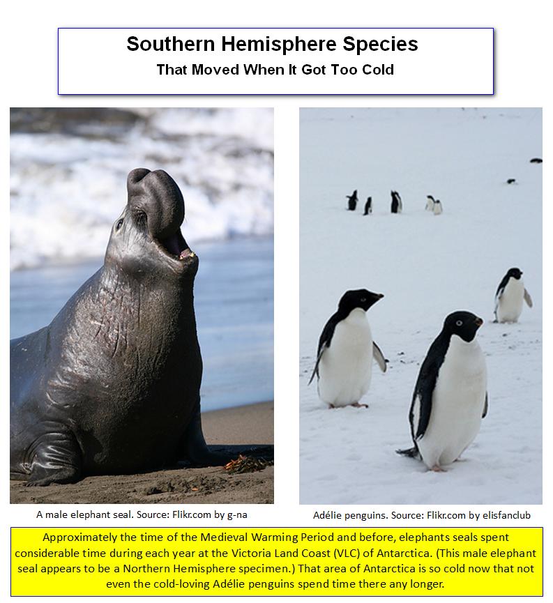 Antartical Seals and Penguins