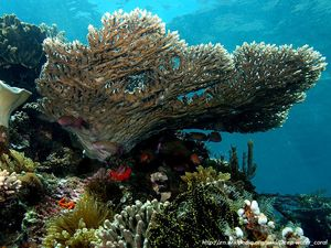 Ocean acidification fears and cold water coral