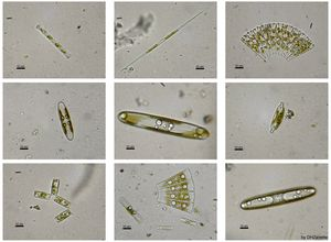 Carbon dioxide emissions facts ocean acidification diatoms