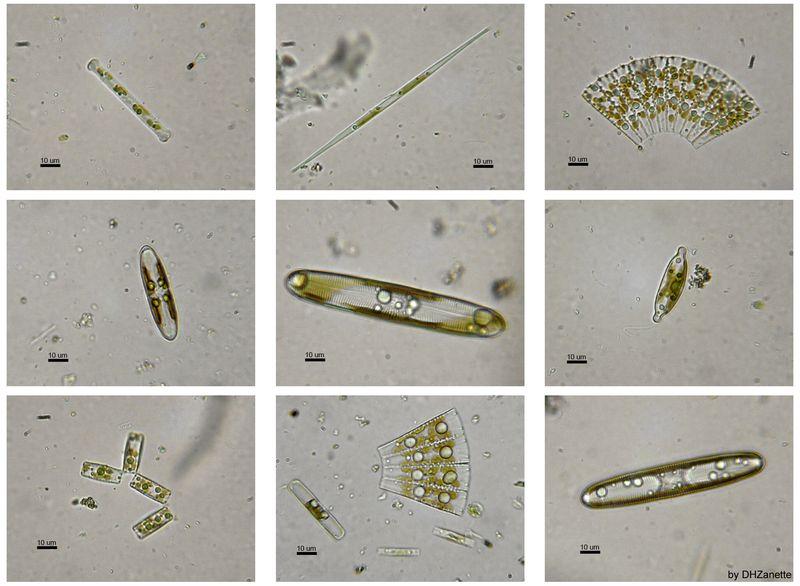 Carbon dioxide emissions facts ocean acidification diatoms