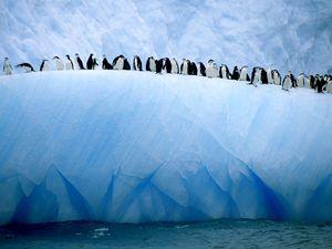 Climate models penguins antarctica