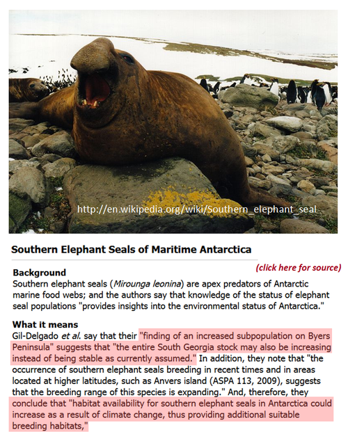 Antarctica elephant seals extinction climate change global warming