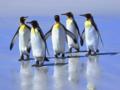 5-penguins