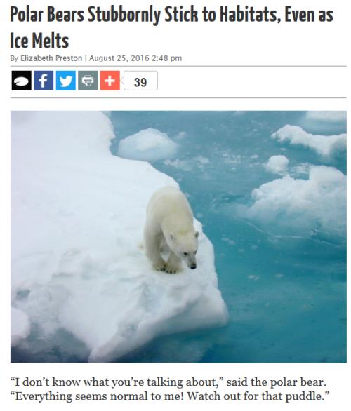 Discover Magazine polar bears
