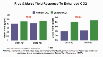 CO2 enhanced rice maize yields 031118