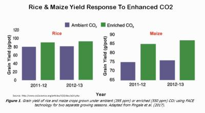 CO2 enhanced rice maize yields 031118